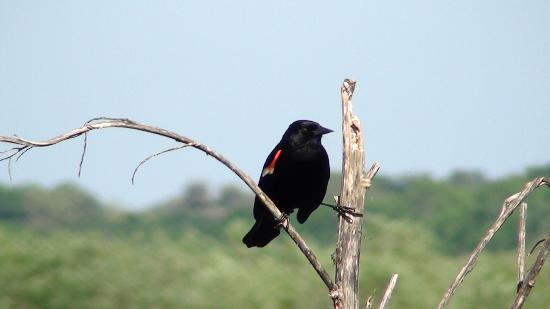 Hampton Inn Leesburg - Tavares: Enjoy all the beauty and wonder on the Florida Birding trail