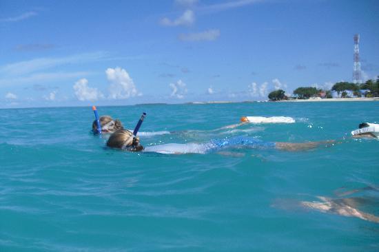 Palm Villa: Snorkling fra kysten