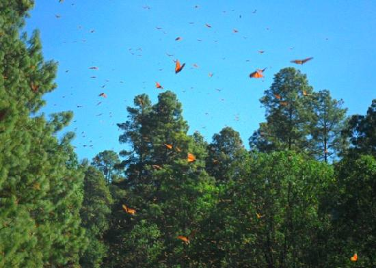 Monarch Butterfly Biosphere Reserve: 1