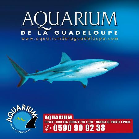 ... rouges - Picture of Aquarium de la Guadeloupe, Le Gosier - TripAdvisor