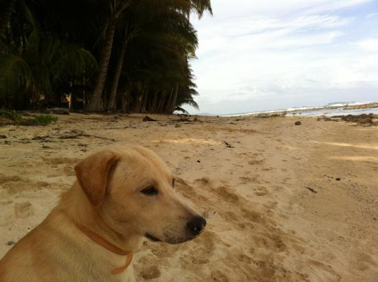 The Boardwalk at Cloud 9: surfer dogs
