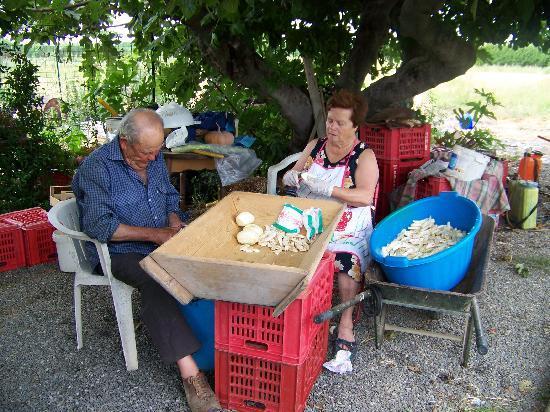 Agriturismo Il Gelsomino Ritrovato : Preparazione delle melenzane