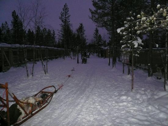 Hotel Jussantupa: Mushing Huskies
