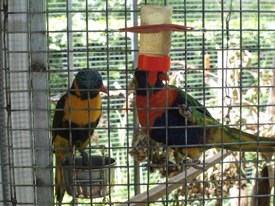 Briardale Bed & Breakfast : Lorikeets in garden