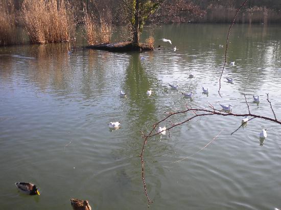 Merian Garten: lots of ponds with water fowl