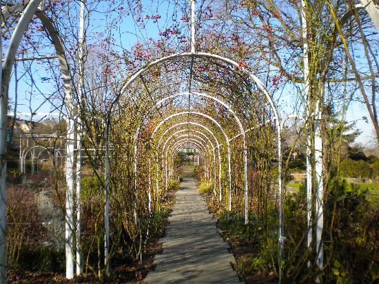 Botanischer Garten Brüglingen / Grün 80: the Rose Garden, a riot of color part of the year