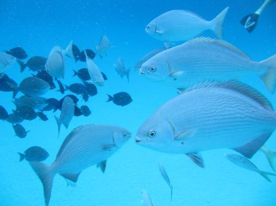 Lots of tropical fish picture of stuart cove 39 s dive for Lots of fish