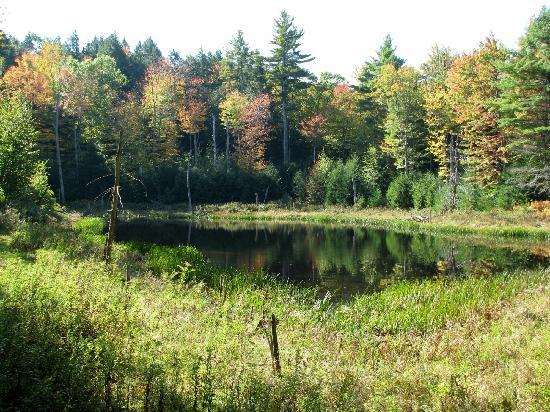 Under the Elm Bed and Breakfast: Beaver Pond, a minute's walk from the B&B
