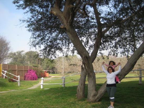 Hotel Las Dunas: Tuvimos suerte y nuestro cuarto daba a este lindo jardin :)