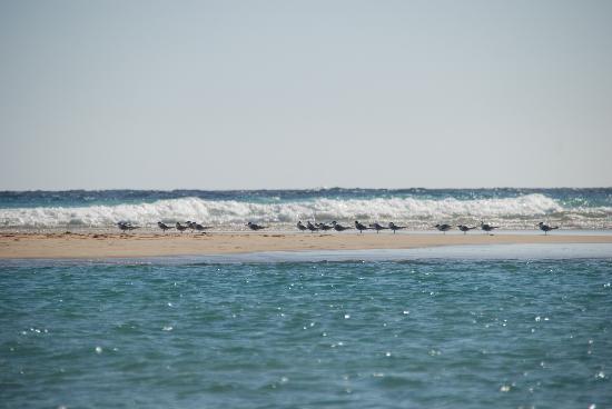 Playa de Jandia, Espagne : Viele Vögel auf engstem Raum zu beobachten