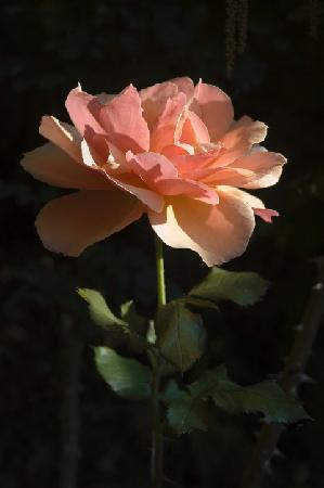 Cross House Garden Inn: SINGLE ROSE
