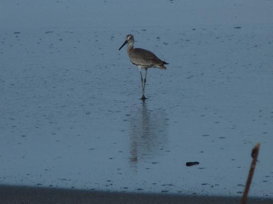 Guicci Resort: Beach Birds