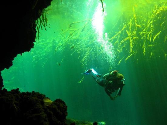La Calypso Dive Center: Dive in Casa Cenote