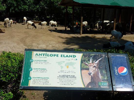 Zoo Buenos Aires: Cartelli sbagliati