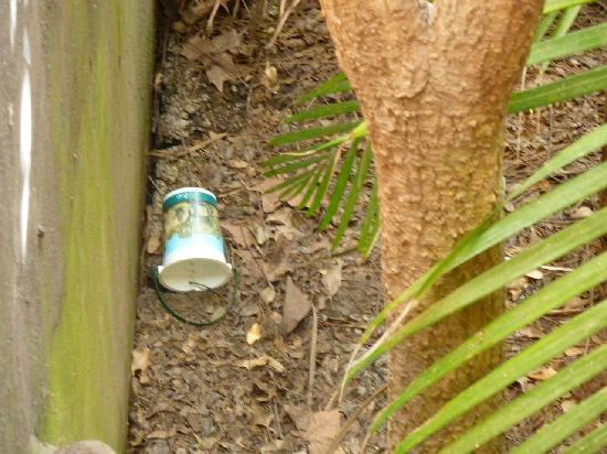 Zoo Buenos Aires: Sporcizia e rifiuti 3