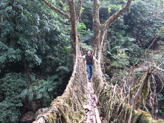 Cherrapunjee, India: Long living root bridge