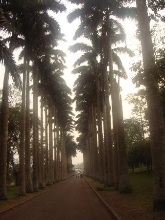 Aburi Botanical Gardens : An avenue lined with palms, a grand entrance to the gardens