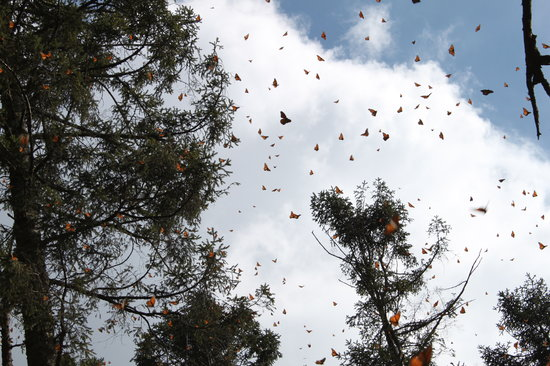 Monarch Butterfly Biosphere Reserve Photo