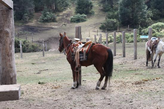Monarch Butterfly Biosphere Reserve: Horseback riding