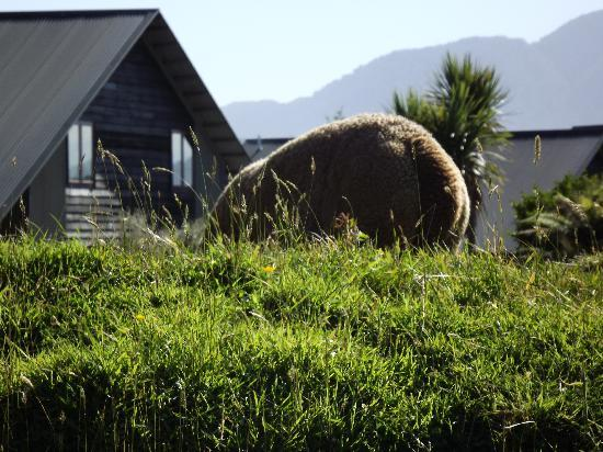 Glenfern Villas Franz Josef: Llama in the foreground, villa and mountains in the background