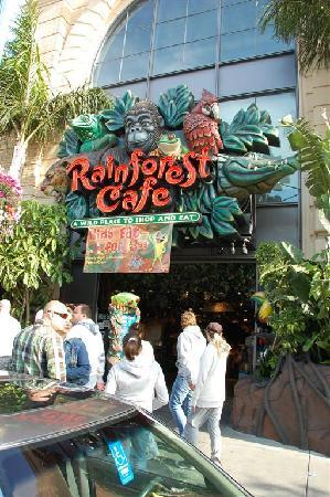 Rainforest Cafe San Francisco Review