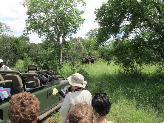 """Chapungu Tented Bush Camp : """"sbrigatevi che qui si mette male..."""""""