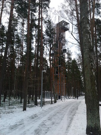 Лесной парк«Дзинтари»