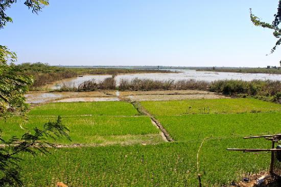 Dancing Roads Cambodia : rice fields