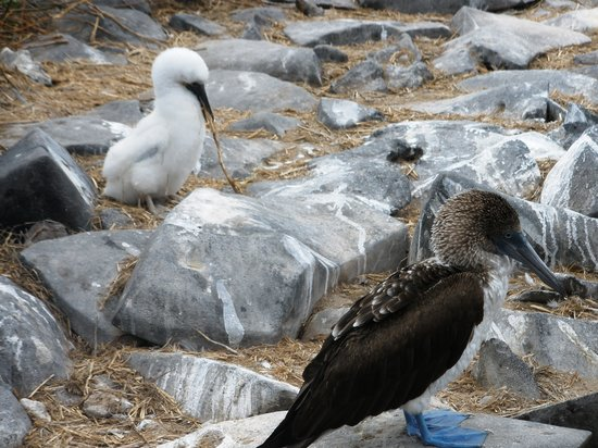 Administracion Turistica del Parque Nacional Galapagos