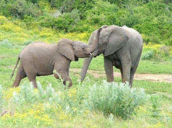 Addo Rest Camp: Just Playing!