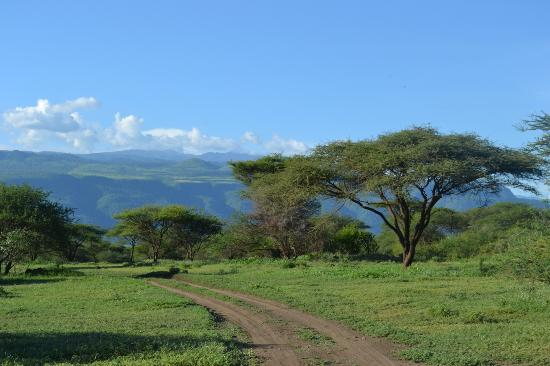 Ol Mesera Tented Camp: Landscape