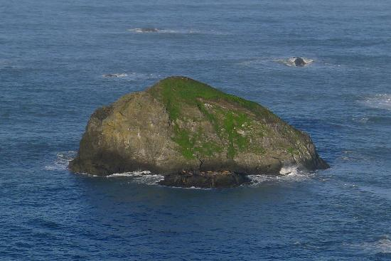Turtle Rocks Inn: Sea lions on the small rock below . . .
