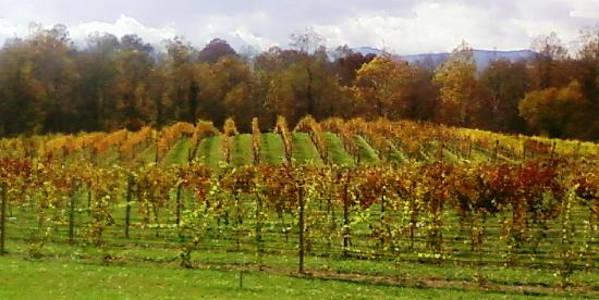 Fall at Gadino Cellars