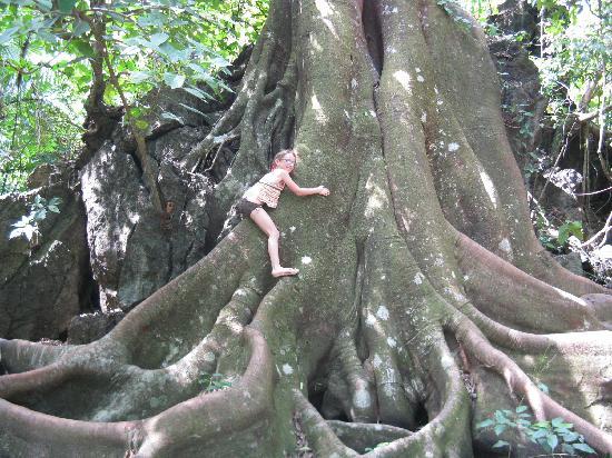 Encanta La Vida: Wonderful tree to climb
