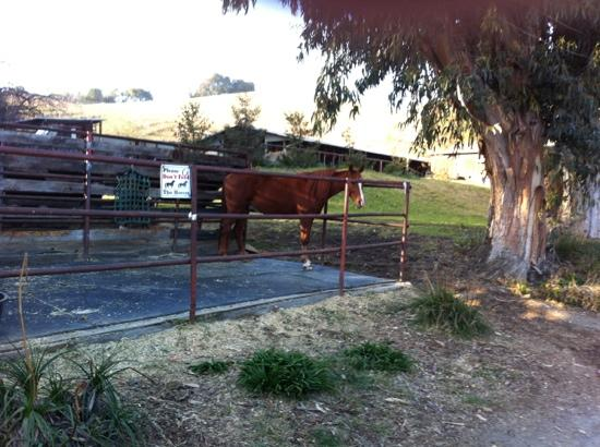 Garrod Farms Riding Stables: one of the many horses