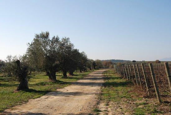 La Vinyeta : Olivos y viñedos de la propiedad