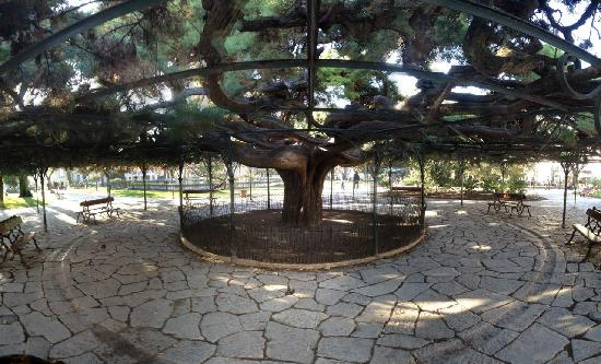 Bairro Alto: Panorama of a park with a huge tree
