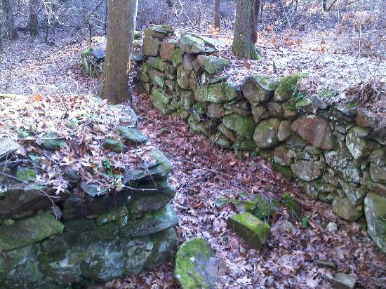 Cormier Woods: Homestead site ruins