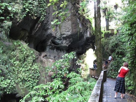 Otorohanga Kiwi Holiday Park: Mangapohue Natural Bridge