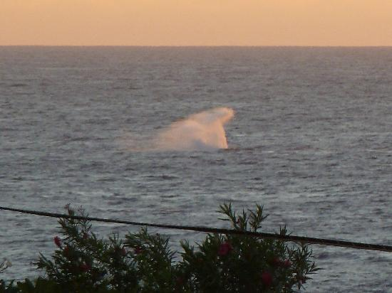 Nihi Kai Villas: Great whale views from #522 lanai