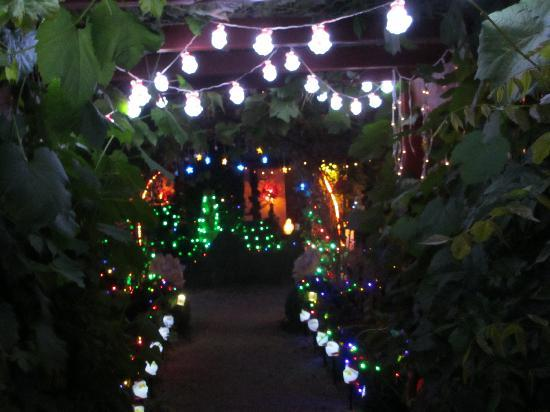 the rose cottage christmas lights in the garden