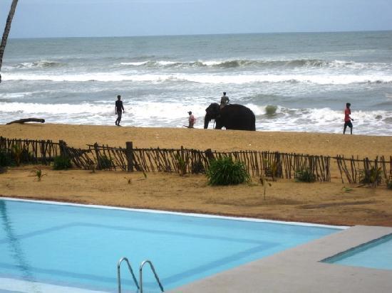Saffron Beach Hotel Wadduwa: Elefanten zu Besuch