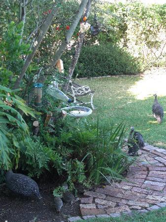 Purple Heron Guest House: Birds in the garden
