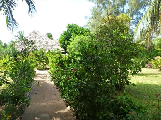 Anna of Zanzibar : Path to our room