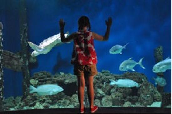 Ньюпорт-Ньюс, Вирджиния: Come face to face with native Virginia Fish