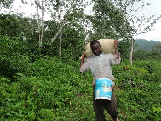 Jarabacoa, Dominican Republic: One of the Spirit Mountain harvesters coming down with the days harvest!