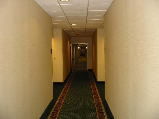 هوموود سويتس باي هيلتون دالاس: Hallways