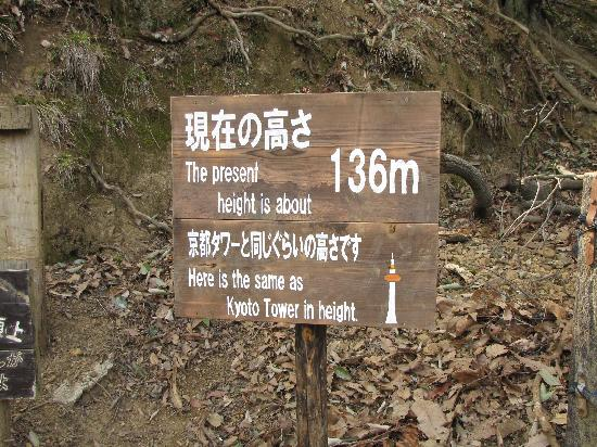 写真嵐山モンキーパークいわたやま枚