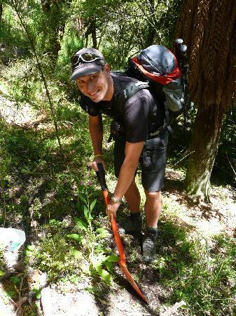 Te Urewera Treks: Tree planting in action