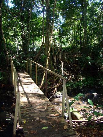 Hacienda La Isla Lodge: in the garden